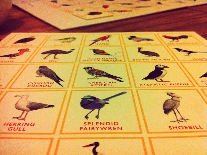 Bird Bingo Fun with a cup of tea Everyday Joy favourite bird = Splendid Fairywren My Smartphone Life -