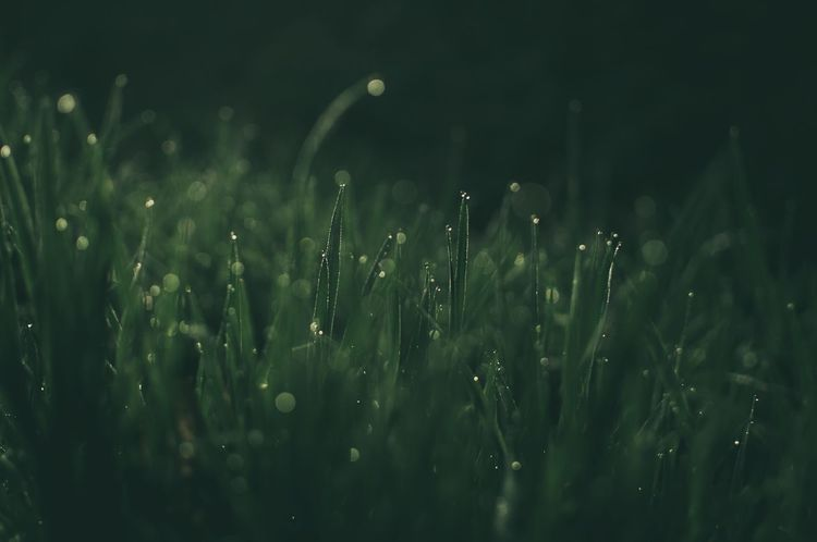 Fresh Mornings Naturephotography Nature_perfection Naturelovers Nature Photography Nature_collection Nature_collection EyeEm Best Shots EyeEmNewHere Growth Green Color Plant Nature Field Beauty In Nature Water Land Selective Focus Tranquility Grass Close-up Outdoors Rain Freshness Day Dew