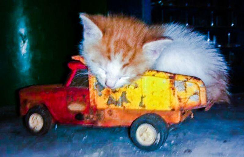 Cat sleeping in car