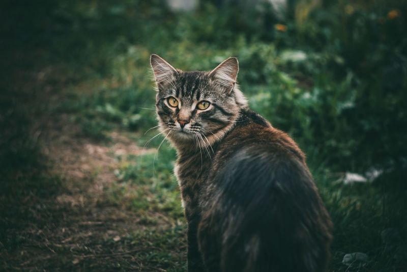 Амур... One Animal No People Pets Animal Themes Cat Cats Helios 44-2 OksanaHorn Helios Cat Watching Cats Of EyeEm Cat Lovers Cats 🐱 Cat Eyes Cat Photography Helios 44M HELIOS 44 Green Green Color EyeEmNewHere EyeEm Best Shots EyeEm Gallery Pet Photography  Pet Portrait Pet Love