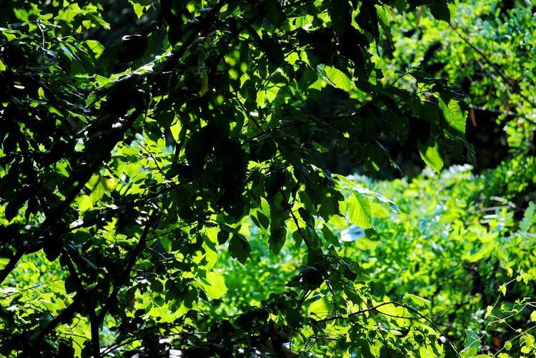 Day Foliage