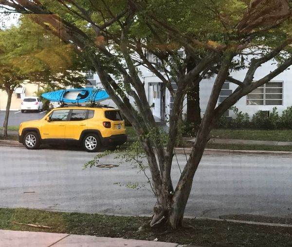 Car on road by tree in city