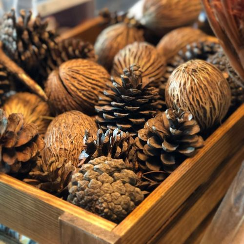 Pinecone Food And Drink Food Freshness Container Still Life Brown No People Selective Focus Close-up