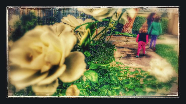Down the rabbit hole Through The Looking Glass Blurred Motion In The Distance Rose Garden White Roses In Motion Walking Around Together Check This Out The Essence Of Summer Walking Along Off We Go Greenery Fun Edit Filter Fun Enhanced