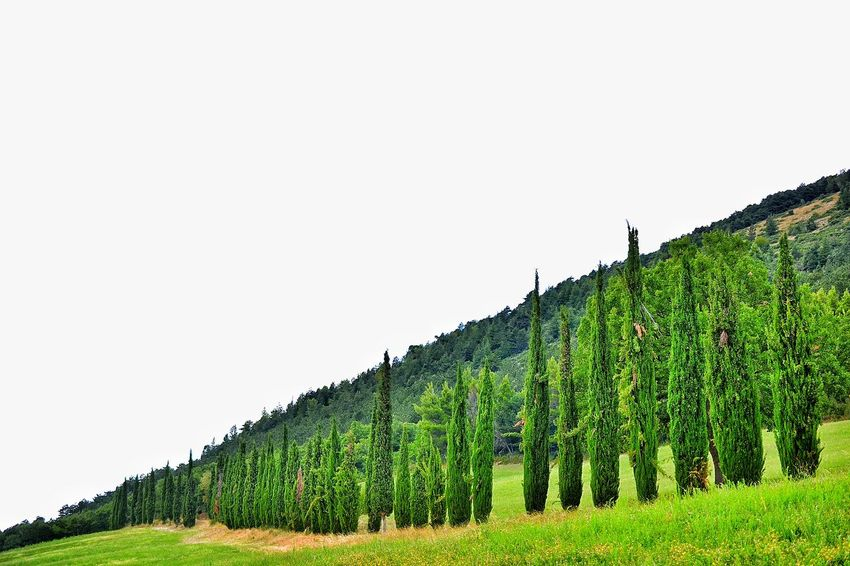 Colour Green Green Nature Trees Trees And Nature Trees Collection Landscape Showcase August Colour Of Life Color Palette Colours Of Life Nature Colors Of Life Colours Of Summer Abruzzo - Italy Colour Palette Summer Go Away Italy Visit Italy Country Road Country Landscape_photography Popoli