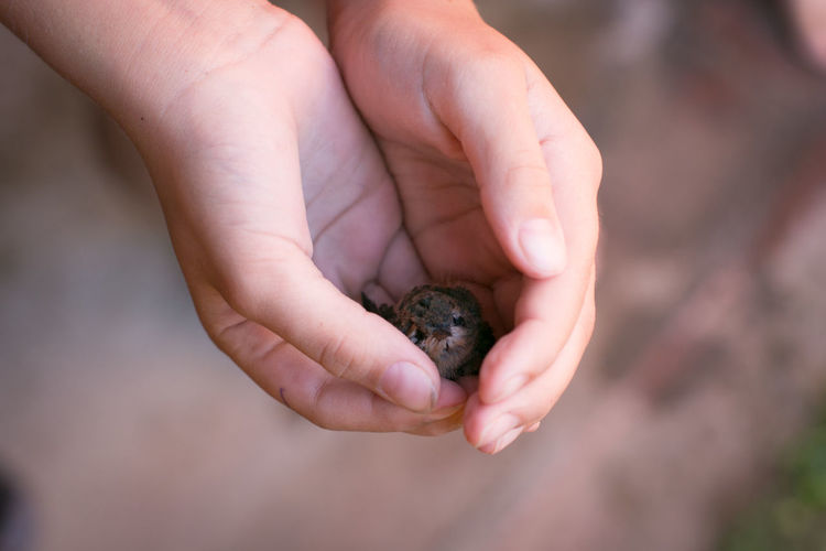 Close-up of hand holding young bird
