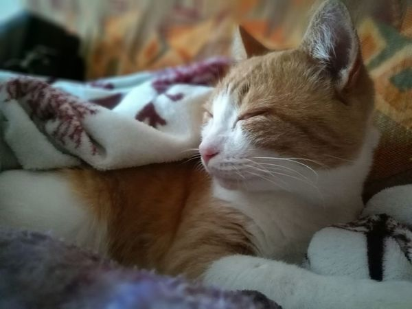 Animals Cat😻 Beautiful Cat My Love💕 Relaxing No People Dreamy Cat Silence