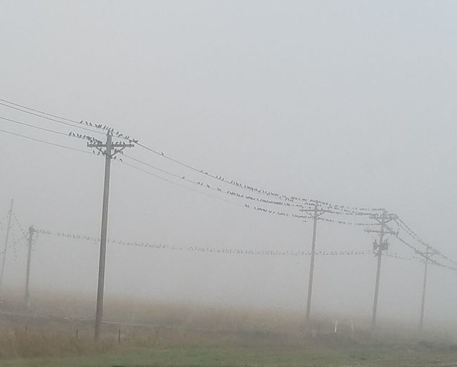 Foggy Fall morning Cable Electricity  Connection Day No People Telephone Line Fog Outdoors Rural Scene Nature Sky Birds