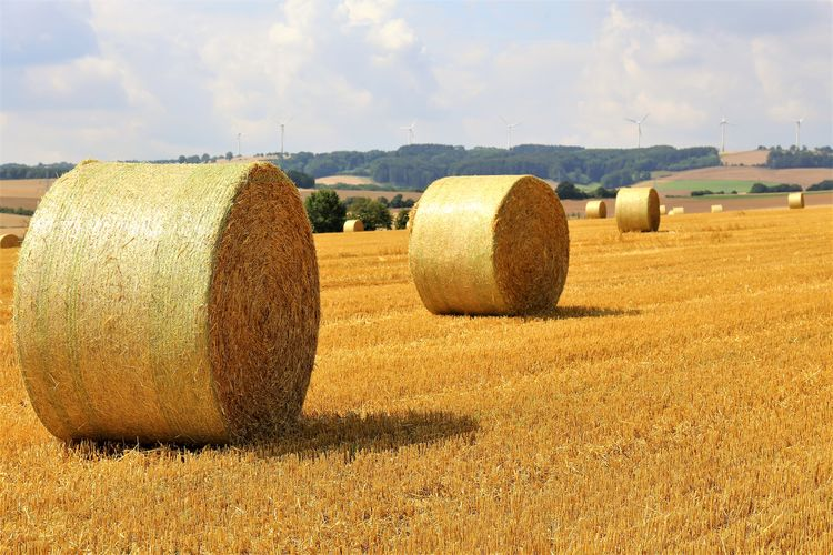 Beauty In Nature Sky No People Outdoors Rolled Up Harvesting Scenics - Nature Plant Environment Land Farm Rural Scene Bale  Agriculture Landscape Hay Field Tranquil Scene Tranquility Nature Day