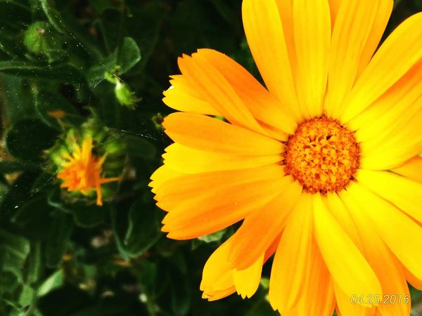 Flower Flower Power🌼 Yellow Green Nature Beautuful♥ Color Photo Cobweb Nature_collection EyeEm Nature Lover