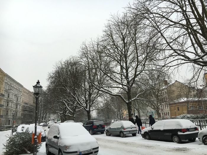 Snow covered trees in city