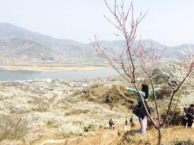 Plum Gwangyang Gwangyang South Korea