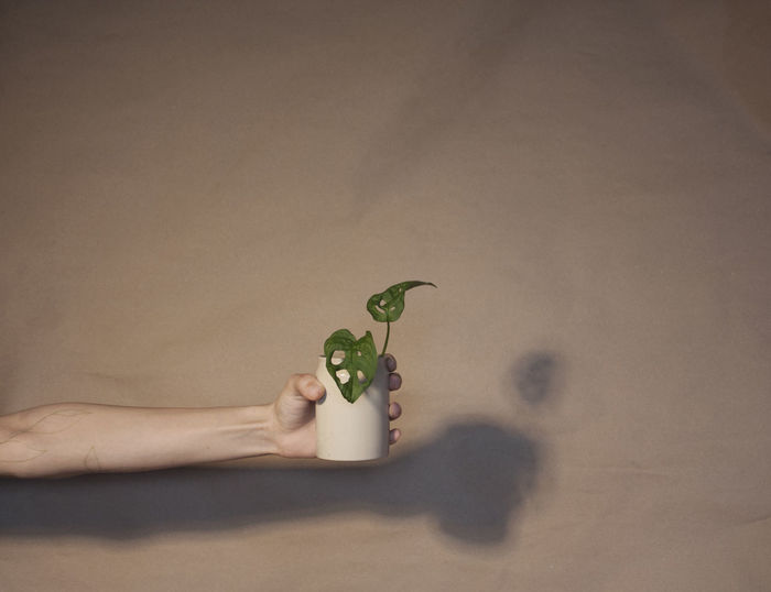 Person holding a plant