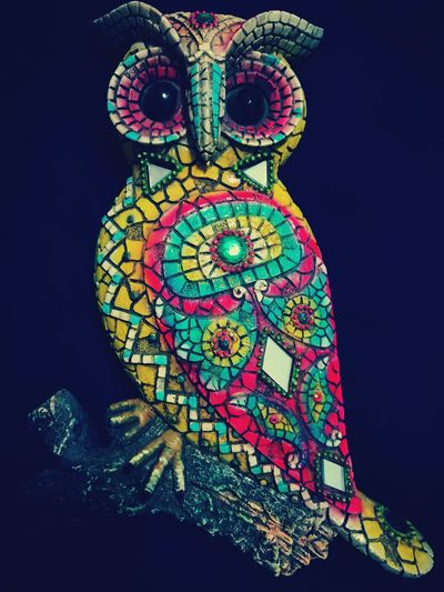 Huawei P9 Leica Dubai Mobilephotography HuaweiP9 Huaweiphotography Owl Owls Owl Art Owl Photography Owls💕 Owls Are Cute Owly OwlYouNeedIsLove Loveforowl