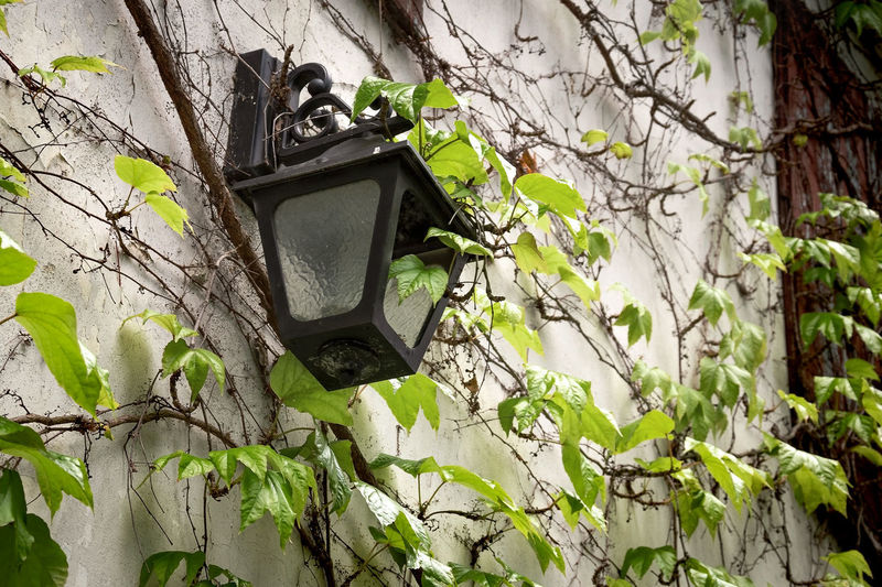 Low angle view of birdhouse on tree against wall