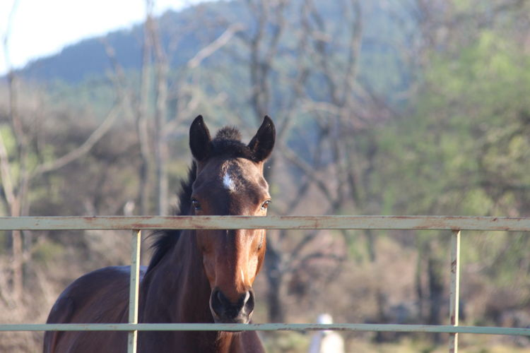 Portrait of horse on field against gate