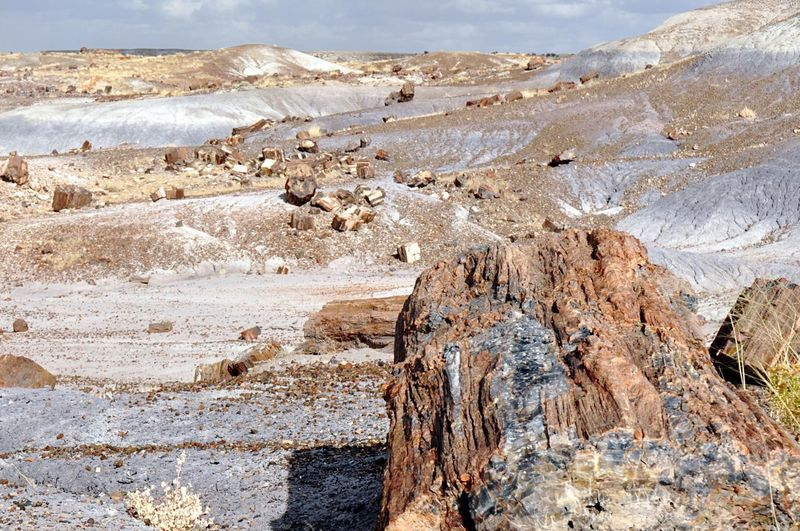 Petrifiedforest Petrified Old Wood Ancient