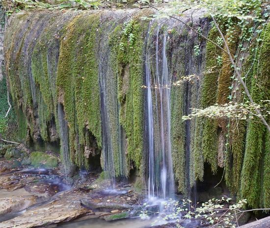 Waterfall with little water Beauty In Nature Day Flowing Water Forest Freshness Green Color Growth Long Exposure Moss Motion Nature No People Outdoors Scenics Sky Tranquil Scene Tranquility Tree Water Waterfall