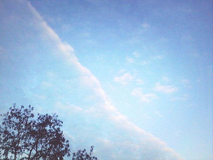 Sky Trees Theskyaboveus