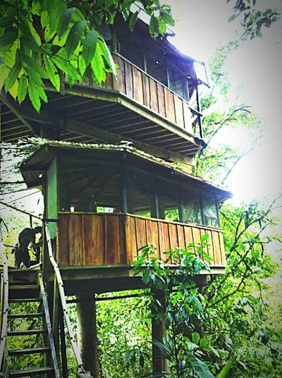 The Traveler - 2015 EyeEm Awards Tree House Community Jungle Life Living In The Canopy Off The Grid Wild Life Style