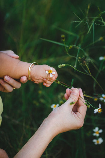 Hands and flowers ASIA Dark Field Grass Green Love Nature Vietnam Flower Hand Human Hand Love ♥ Outdoors People Wild Flowers