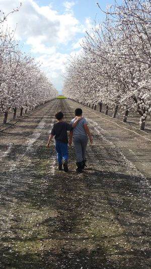 Two People Day Beauty In Nature Nature Real People Cloud - Sky Trees And Nature Almonds Blossom Brotherly Love Brothersforlife Walking On The Field