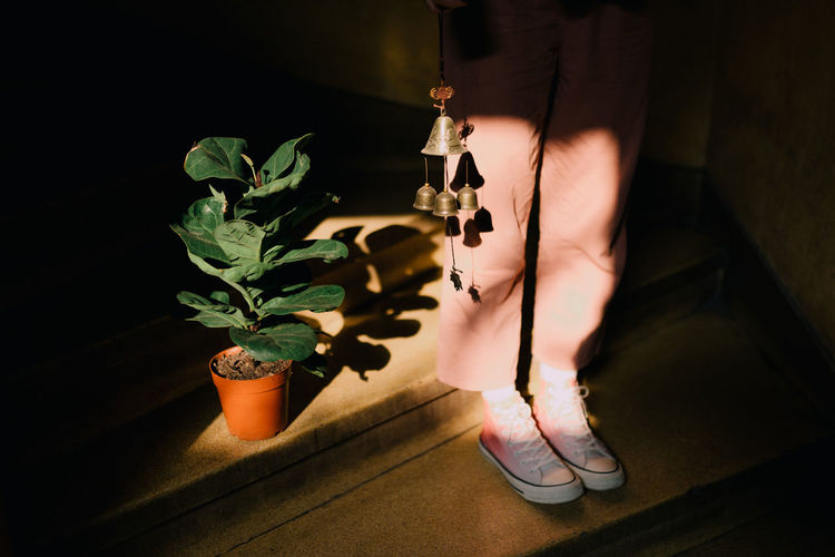 Low section of woman standing by potted plant
