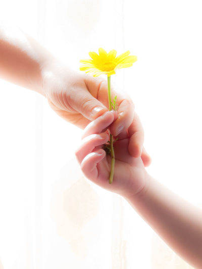 Close-up of hand giving flower to person against white background