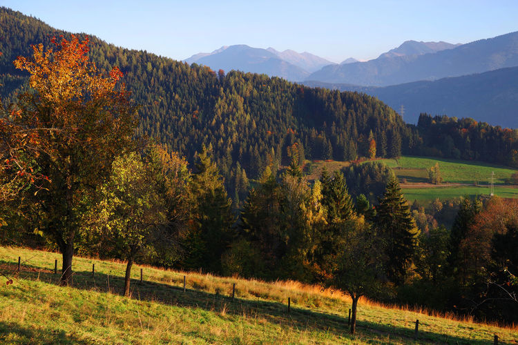 Austrian Alps in autumn colours Tree Plant Scenics - Nature Environment Tranquil Scene Beauty In Nature Tranquility Landscape Mountain Land Field Nature Growth No People Sky Day Non-urban Scene Mountain Range Outdoors Salzkammergut Salzkammergut, Austria Austria Autumn Autumn colors Autumn Leaves