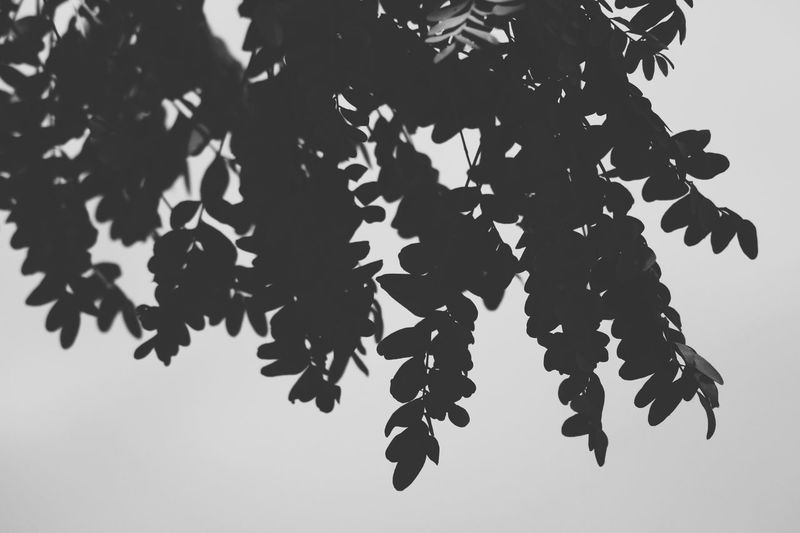 Low angle view of branch against sky