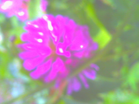 DigitalHarinezumi Flower Smokey Plant Day Outdoors Soft Focus