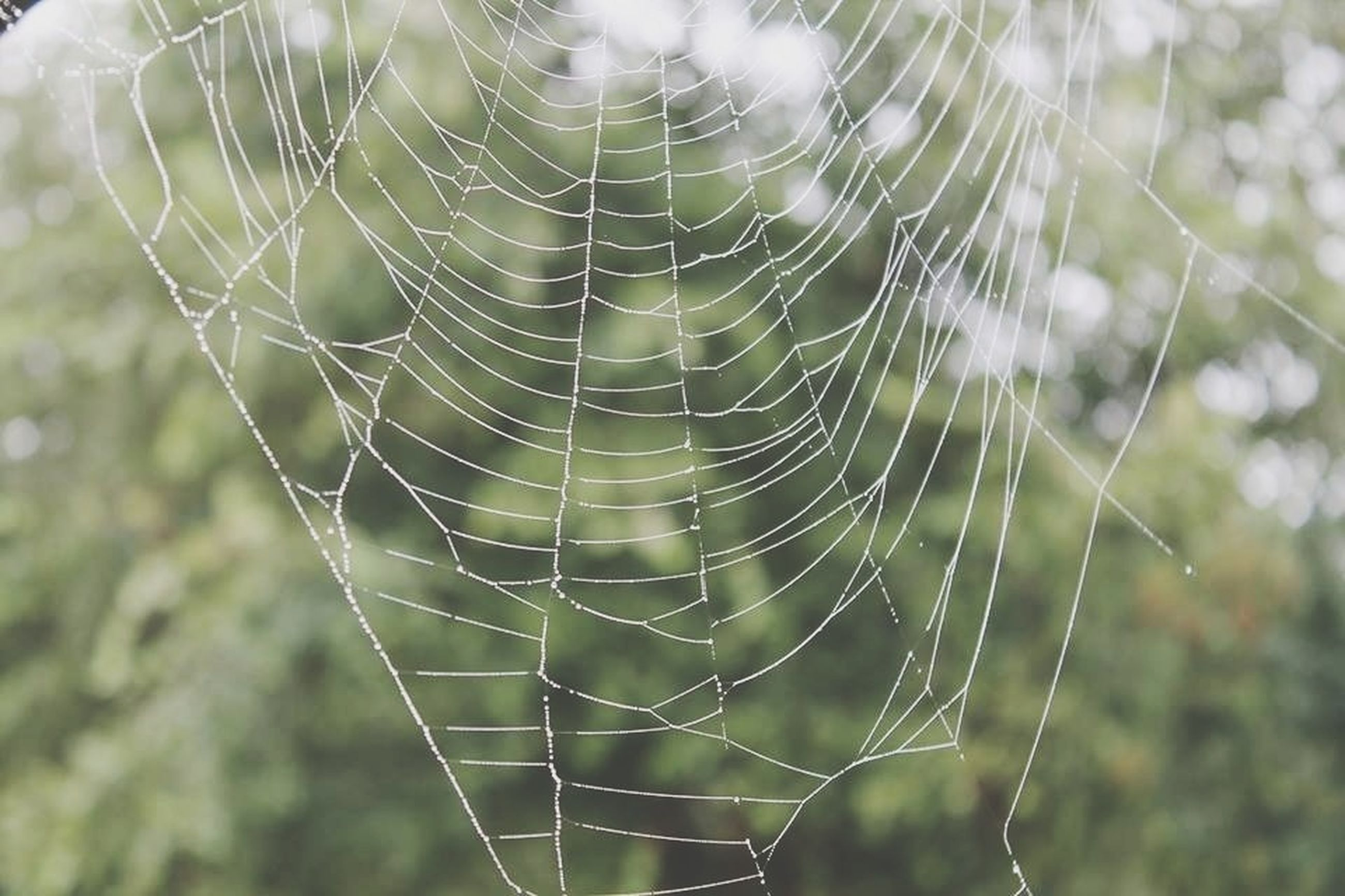 spider web, focus on foreground, close-up, fragility, natural pattern, spider, complexity, nature, pattern, day, outdoors, drop, selective focus, beauty in nature, animal themes, web, no people, plant, dew, full frame