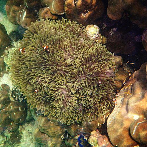 Under The Sea Tarutaonationalpark Nemo Nemo Fish Coral Olympus