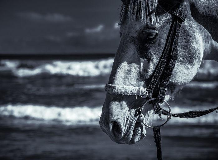 Horse head on the beach in accra ghana.