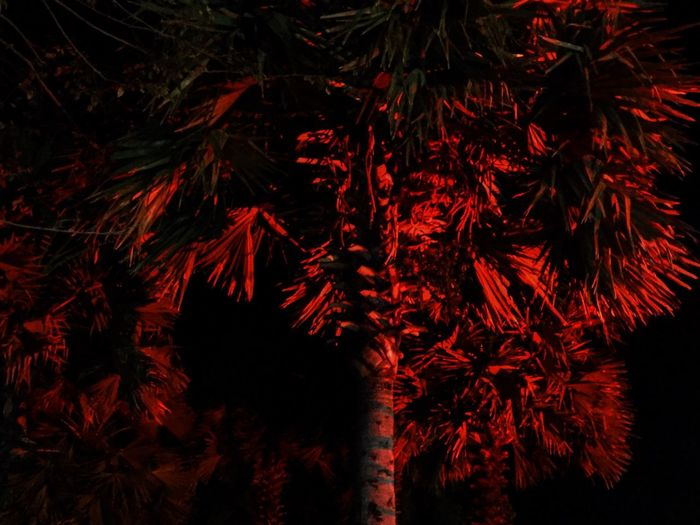 Trees Lighting Effects