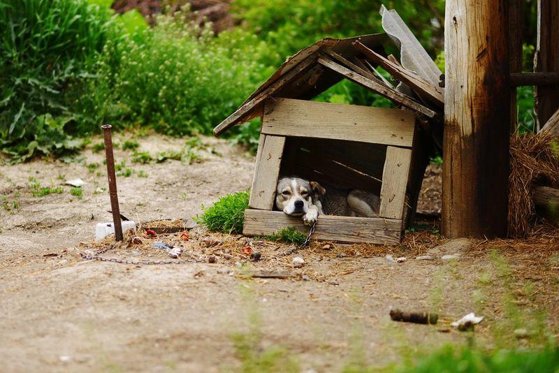 Captive Timeless Loneliness Faithful Dog Backyard Sunset Bored Afterdinner Market Reviewers' Top Picks
