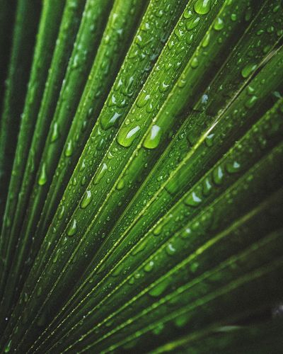 Full frame shot of wet leaves
