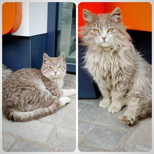 Animals First Eyeem Photo Cats 🐱 Cat Catslife