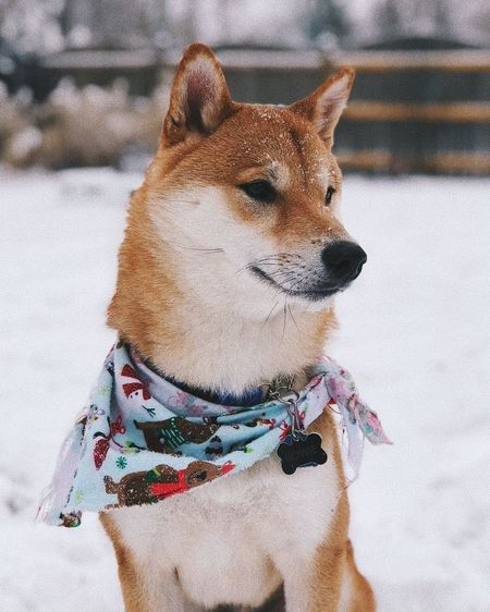 Close-up of dog during winter