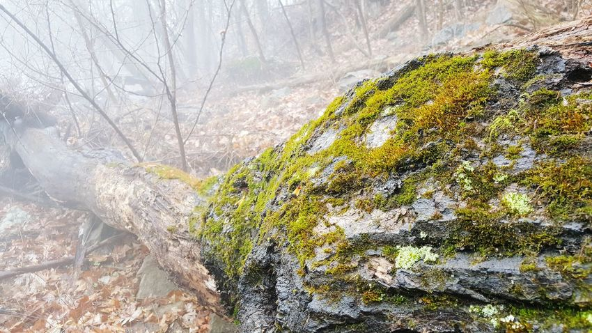 Taken while on a hike in Silver Spring, MD.Tree Growth Nature No People Close-up Day Outdoors Beauty In Nature Water Fallen Tree Mist Fog Moss Morning Forest The Purist (no Edit, No Filter) Foggy Fine Art Photography Fine Art Finding New Frontiers Miles Away Miles Away Silver Spring, Maryland, USA Burnt Mills Dam Maryland The Great Outdoors - 2017 EyeEm Awards