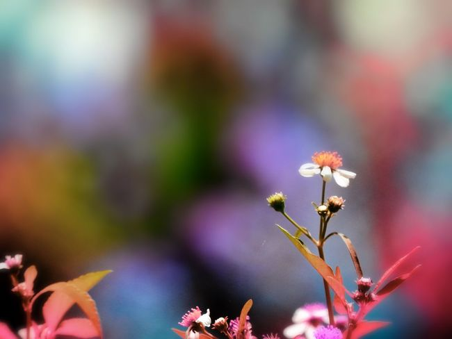 Flowering Plant Flower Plant Beauty In Nature Growth Vulnerability  Fragility