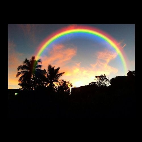 Rainbow Editgram Colourbound Colourporn Colorporn Palm Light IGDaily Islandlivity Islandlife Grenada Outdoor All_shots
