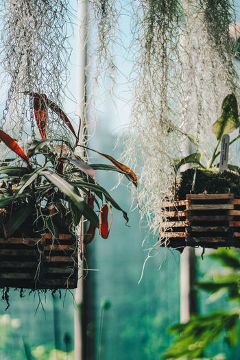 Animal Themes Beauty In Nature Branch Close-up Day Glasshouse Glasshouse Flowers Growth Grunge Low Angle View Nature Nature No People Outdoors Plant Plant Plants Present Preset Sky Tree Tree Trunk