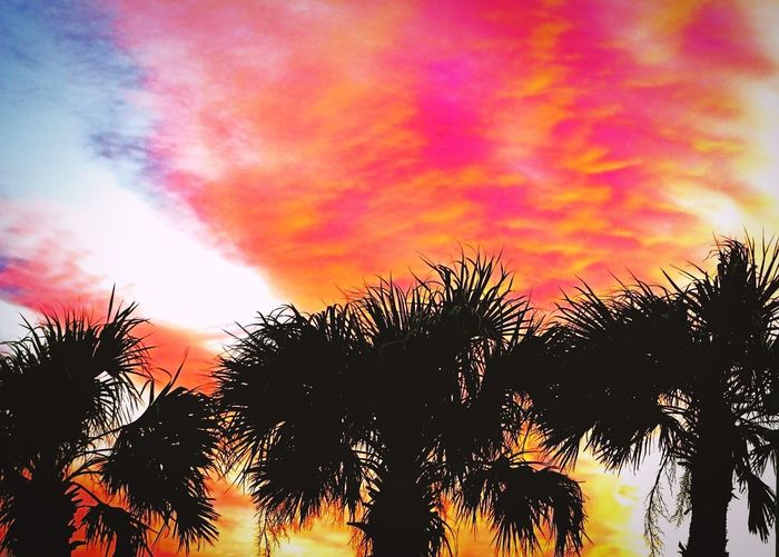 Low angle view of silhouette palm trees against romantic sky