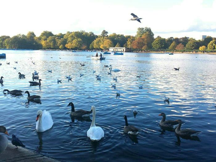 Beautiful day in London :) Hyde Park City Of London Lakesideview Feeding Ducks Swans Landscape Blue Sky Sky Clouds The Great Outdoors With Adobe