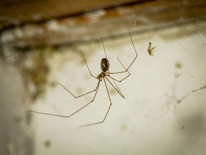 Spider Spiders