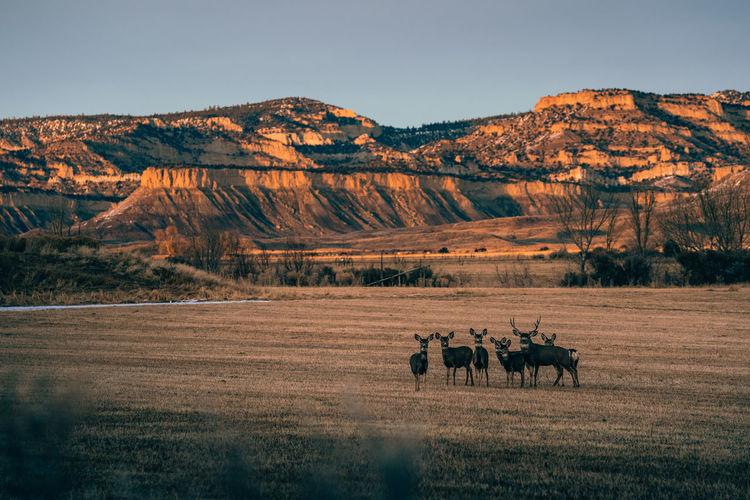 View of reindeers on field against mountain range