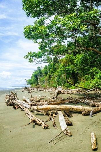 Beach landscape in Corcovado National Park, Costa Rica Caribbean Sea Caribbean Life Central America Corcovado Costa Rica Costa Rica 🇨🇷 Summertime Travel Travel Photography Traveling Tropical Paradise America Beach Caribbean Corcovado National Park Landscape Paradise Paradise Beach Summer Travel Destinations Tropical