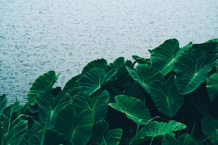 Close-up of green plants on shore