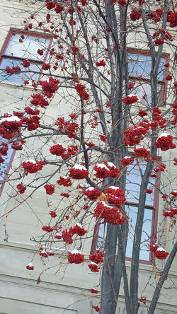 Red No People Day Built Structure Close-up Outdoors City Architecture Nature Montana Tree Beauty